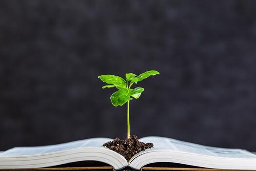 本から芽が出ている